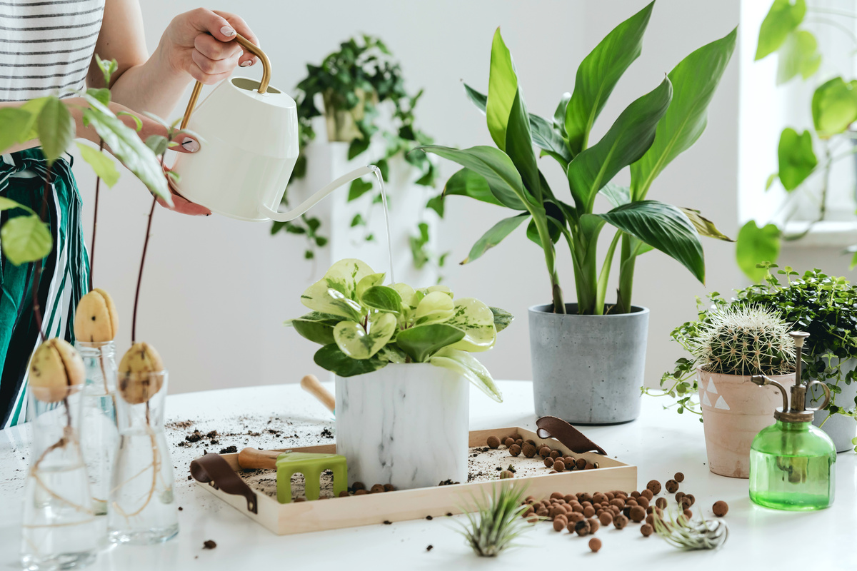 Best house plants to buy if you don't have a garden