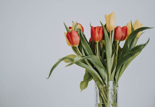 Tulips are a very popular choice of flowers