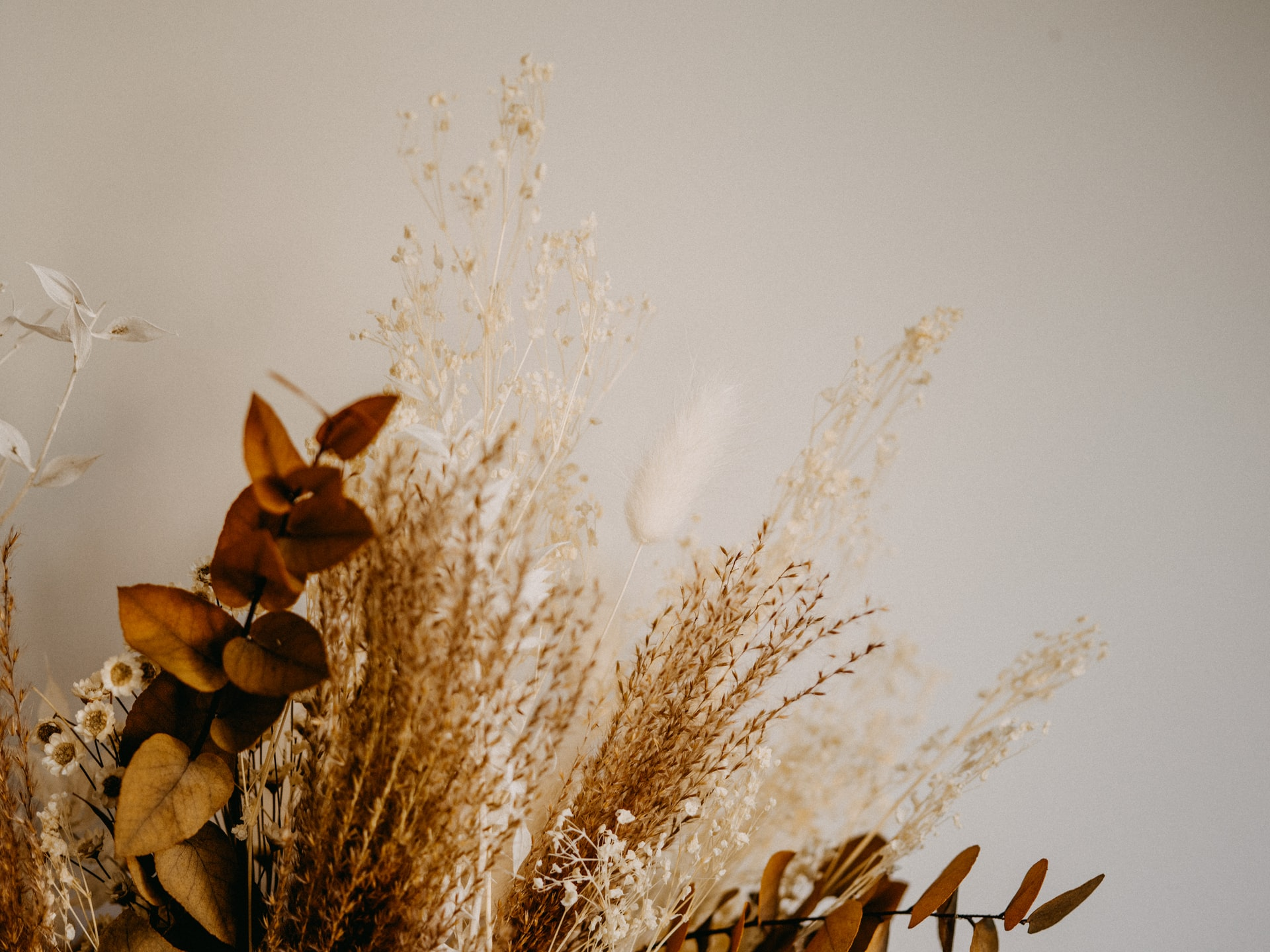 Dried autumn flowers in shades of brown and orange.